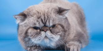 Cat Behaviour
